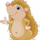 hillary_hedgehog